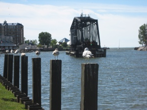 Sea Gull Harbor in St Joseph Michigan