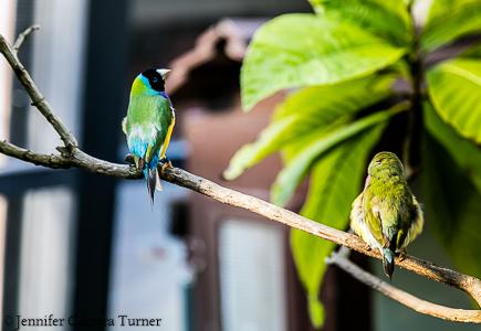 nature-garden-photography-15