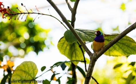 nature-garden-photography-18