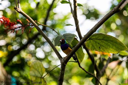 nature-garden-photography-19