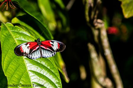 nature-garden-photography-20