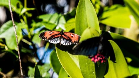 nature-garden-photography-21