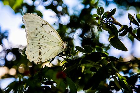 nature-garden-photography-22