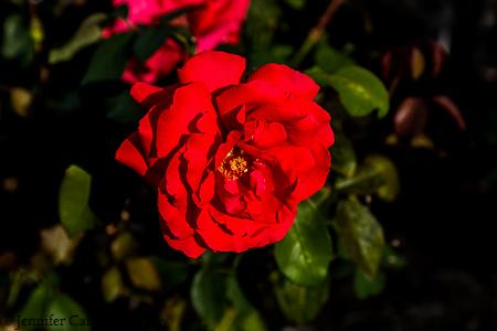nature-garden-photography-25
