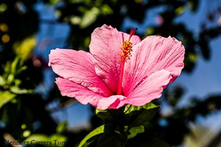 nature-garden-photography-6