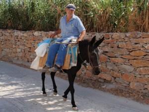 Amorgos donkey