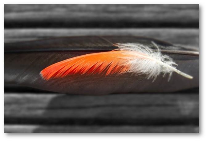 Thistledown – Midsummer Bedlam 29 — A Hummingbird